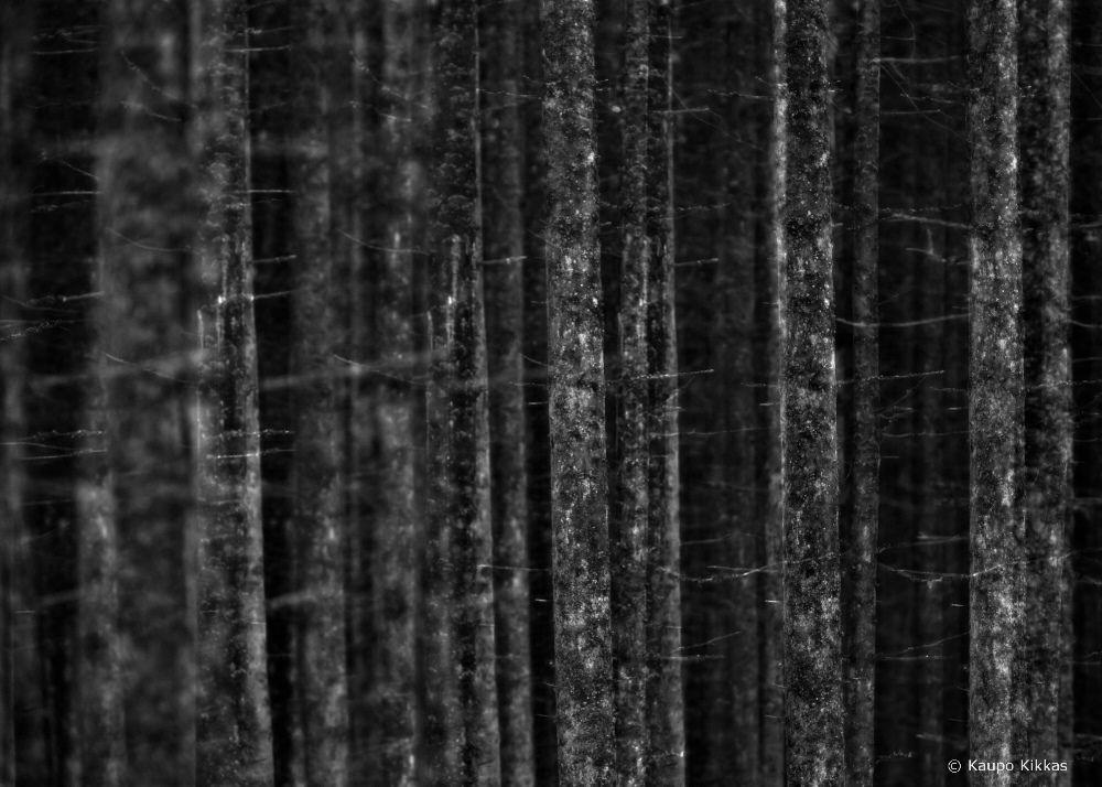 © Kaupo Kikkas