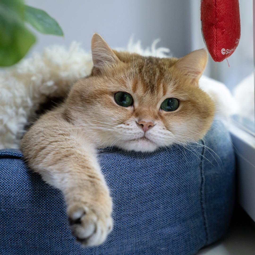 Hosico Cat Hosico Cat Instagram Posts Videos Stories On Webstaqram Com It Looks Like It Might Snow Cute Animals Animals Beautiful Beautiful Cats