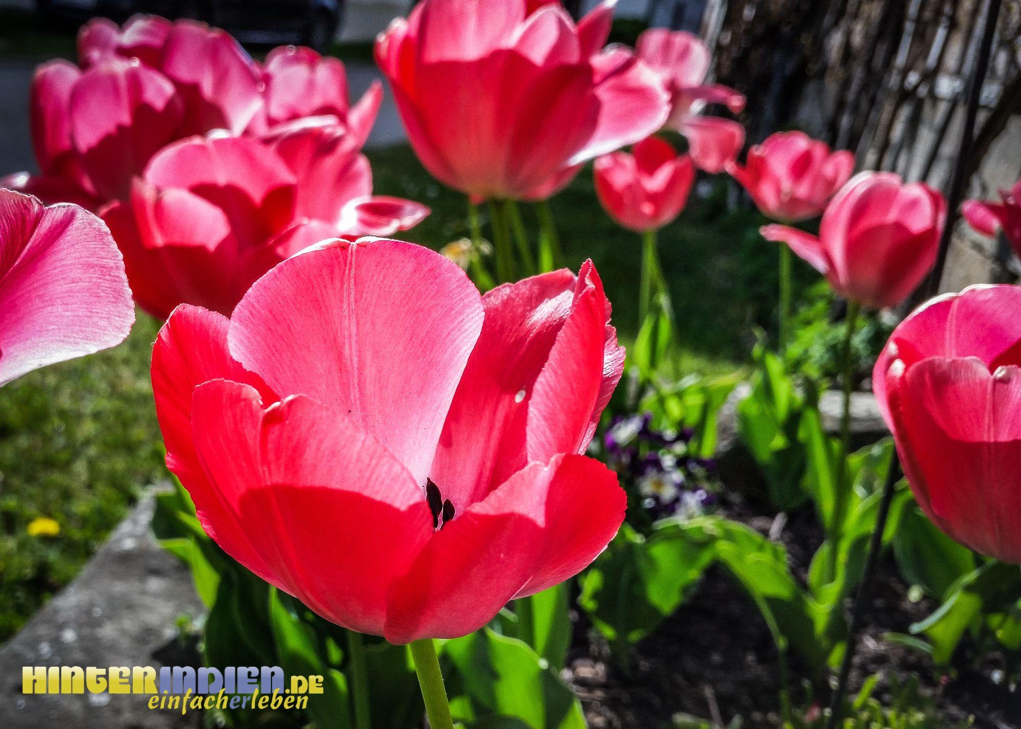 100 Prozent Frühling