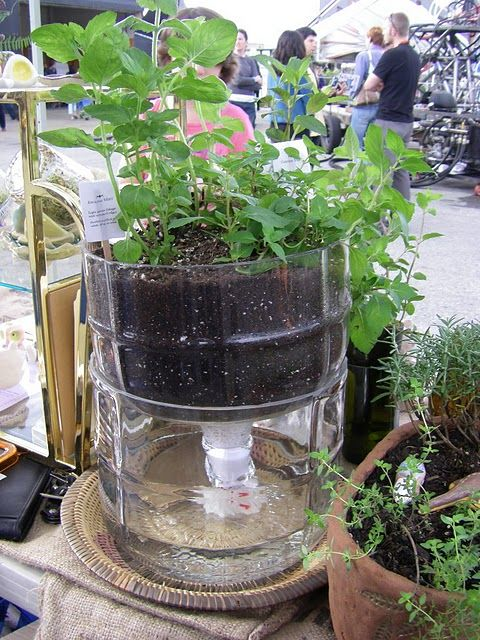 Self Watering Pot Made From An Old Gl Bottle What To Use For A Wick Cotton Hemp