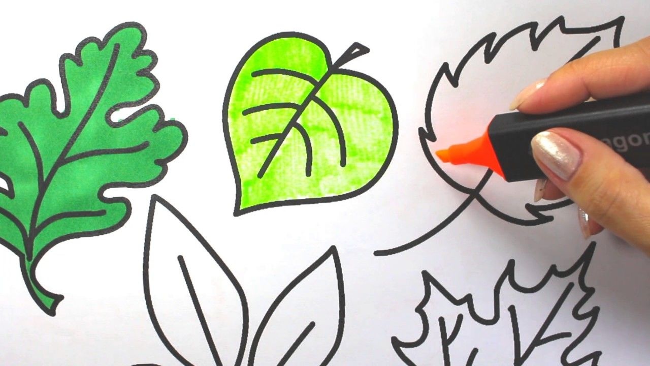 leaves trees coloring pages how to color leaves | coloring book ...