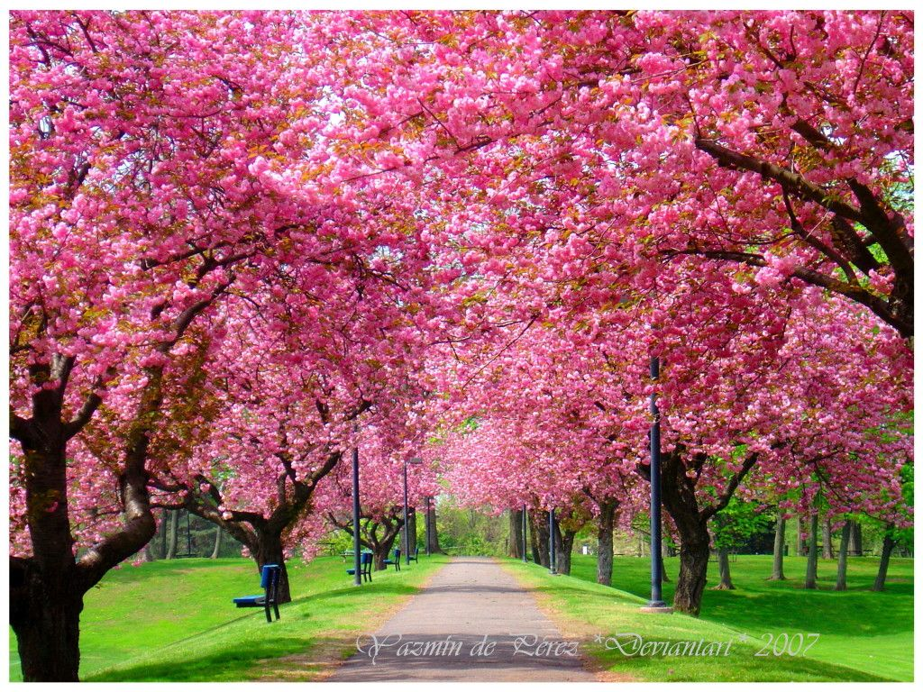 Image Result For Free Spring Screensavers Free Screensavers