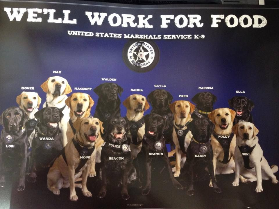 K 9 Us Marshall Service Military Dogs United States Marshal