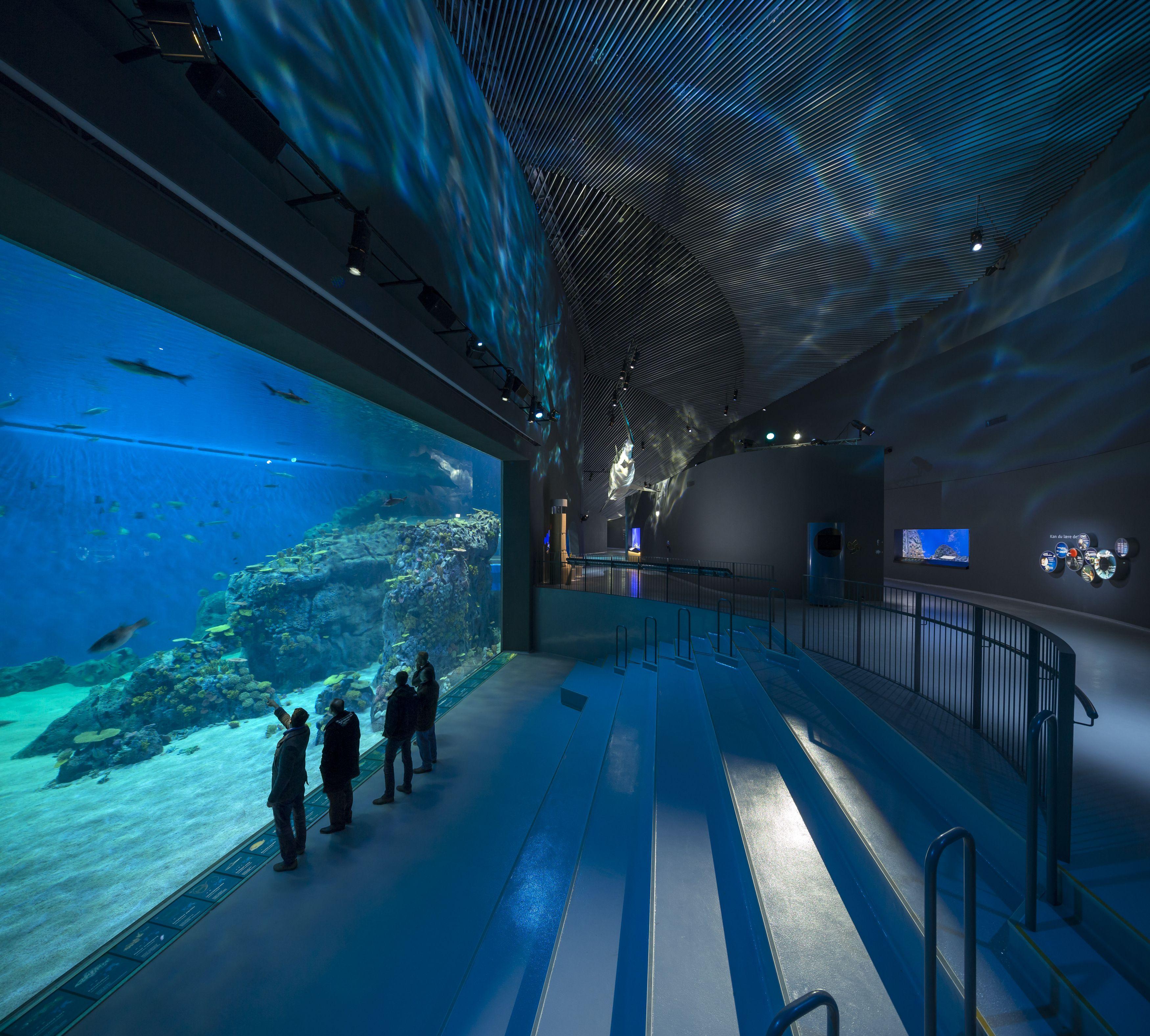 planetarium biograf den blå planet odense