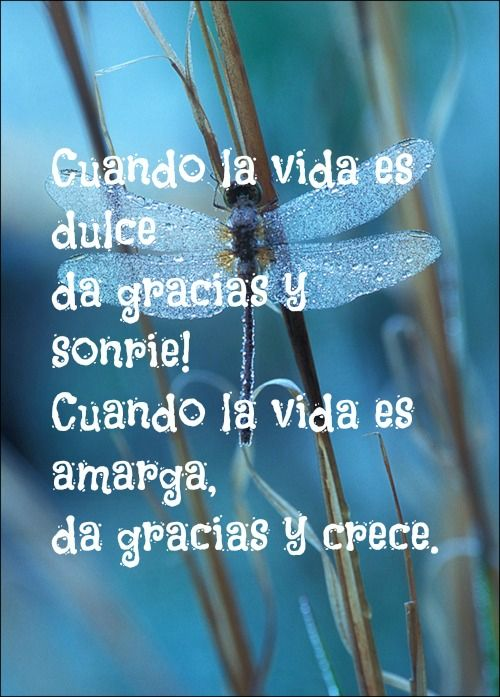 Blog Sefeliz Behappy Libelulas Frases Gratitude Y Quotes