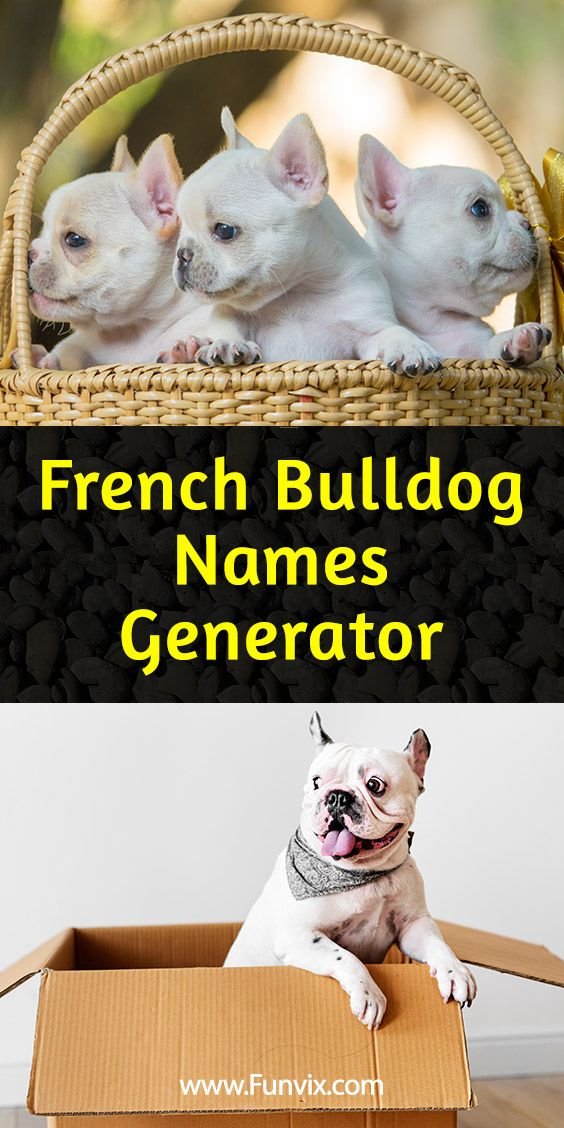 French Bulldog Name Generator (With images) French