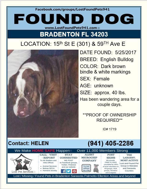 Do You Know Me Founddog Lost Dog Bulldog Englishbulldog