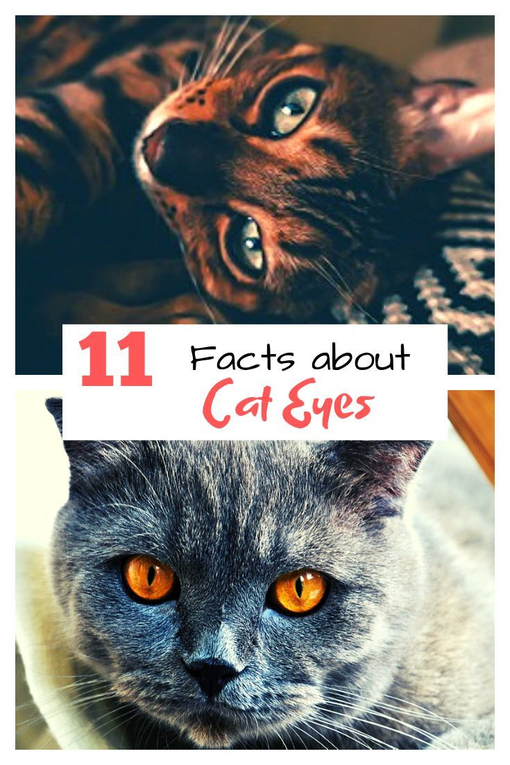 Have you noticed how amazing a cats eyes can be? From