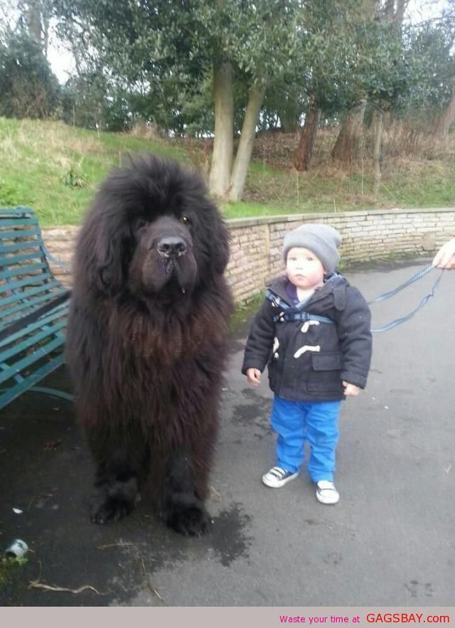 LOVE the size differential and KNOW that dog would lay