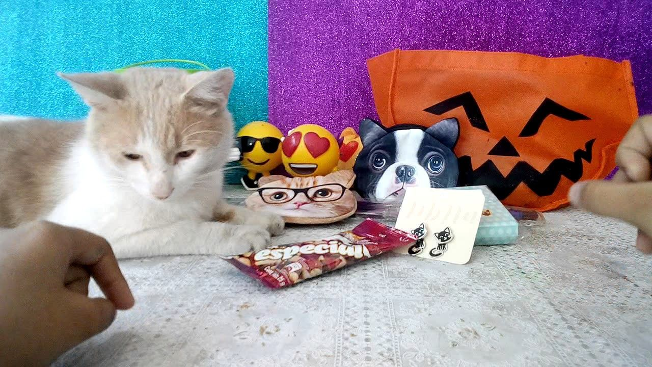 Ideas Asombrosas Para Los Amantes De Los Gatos