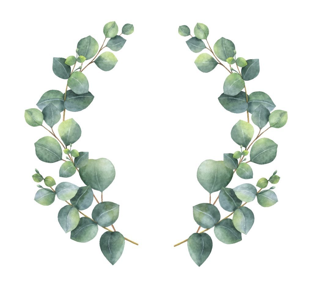 Watercolor Vector Wreath With Silver Dollar Eucalyptus Leaves And