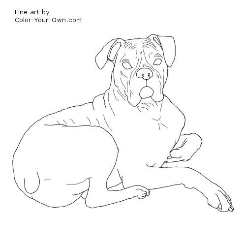Boxer Dog Laying Down Coloring Page Dog Line Art Dog Line Boxer Dogs