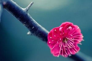 Lonely Flower Branch Focus HD Wallpaper