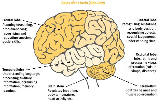 The brain controls our every thought and action this diagram shows the brain controls our every thought and action this diagram shows the parts of the brain and the functions that take place there ccuart Images