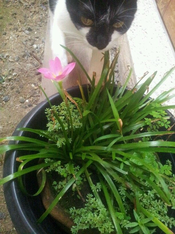 ....tem jeito de planta, cheiro de mato e não sai do lugar quando eu encosto nela. Mãe,  é uma flor!