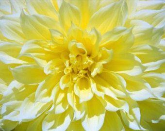 Flower Photo, Dahlia Yellow, 8x10 Fine Art Photograph, Nature Photo, Yellow, Flower Close Up Photo, Garden Photo, Wall Decor