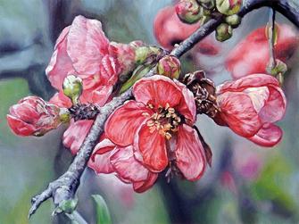 Картина по номерам Номерашка (Paintboy) «ветка яблони ...