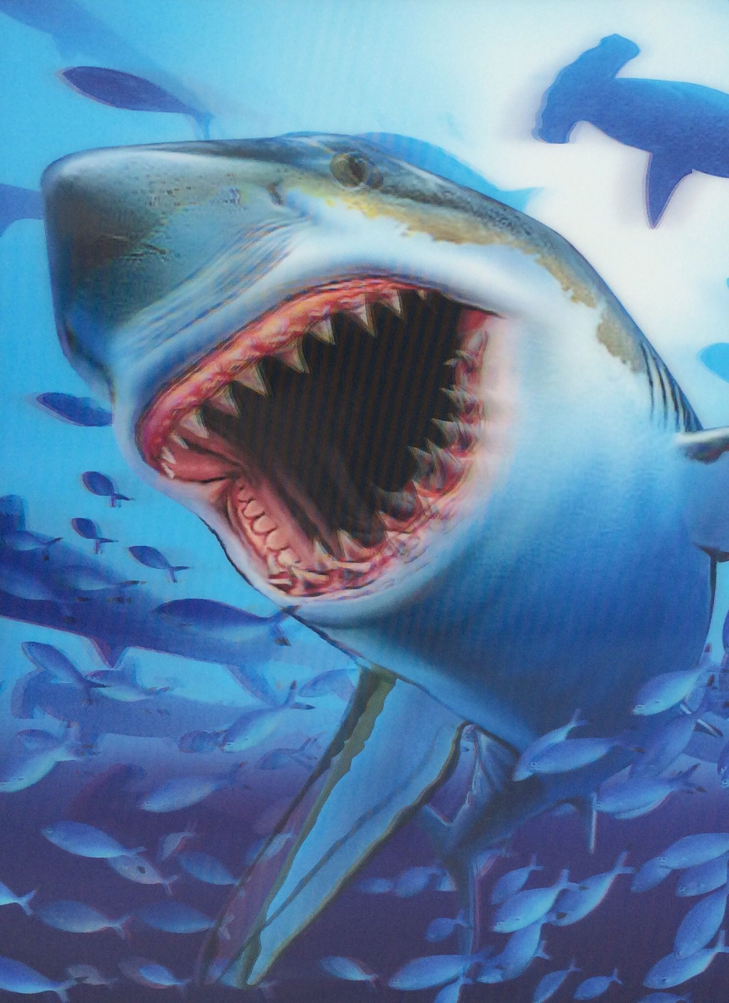3d Picture Shark Shark Mural Shark Painting 3d Pictures
