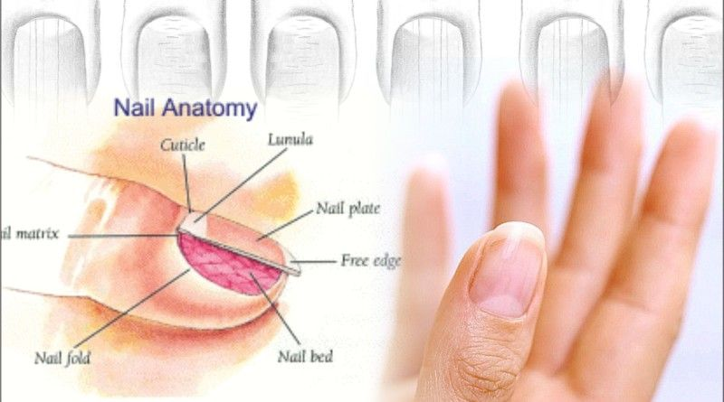 You Have White Fingernail Lines. Explanation behind White Lines on ...