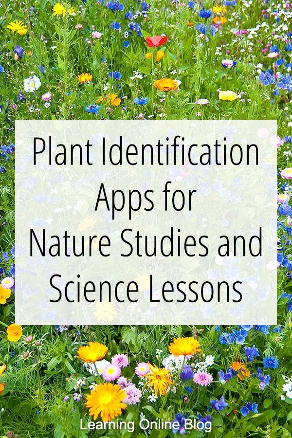 Use these plant identification apps for nature studies, science lessons, unit studies, and other learning. #homeschool #NatureStudies #homeschoolscience