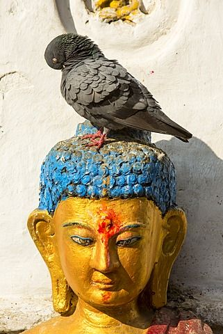 A pigeon on a Buddhist statue in Kathmandu, Nepal, Asia