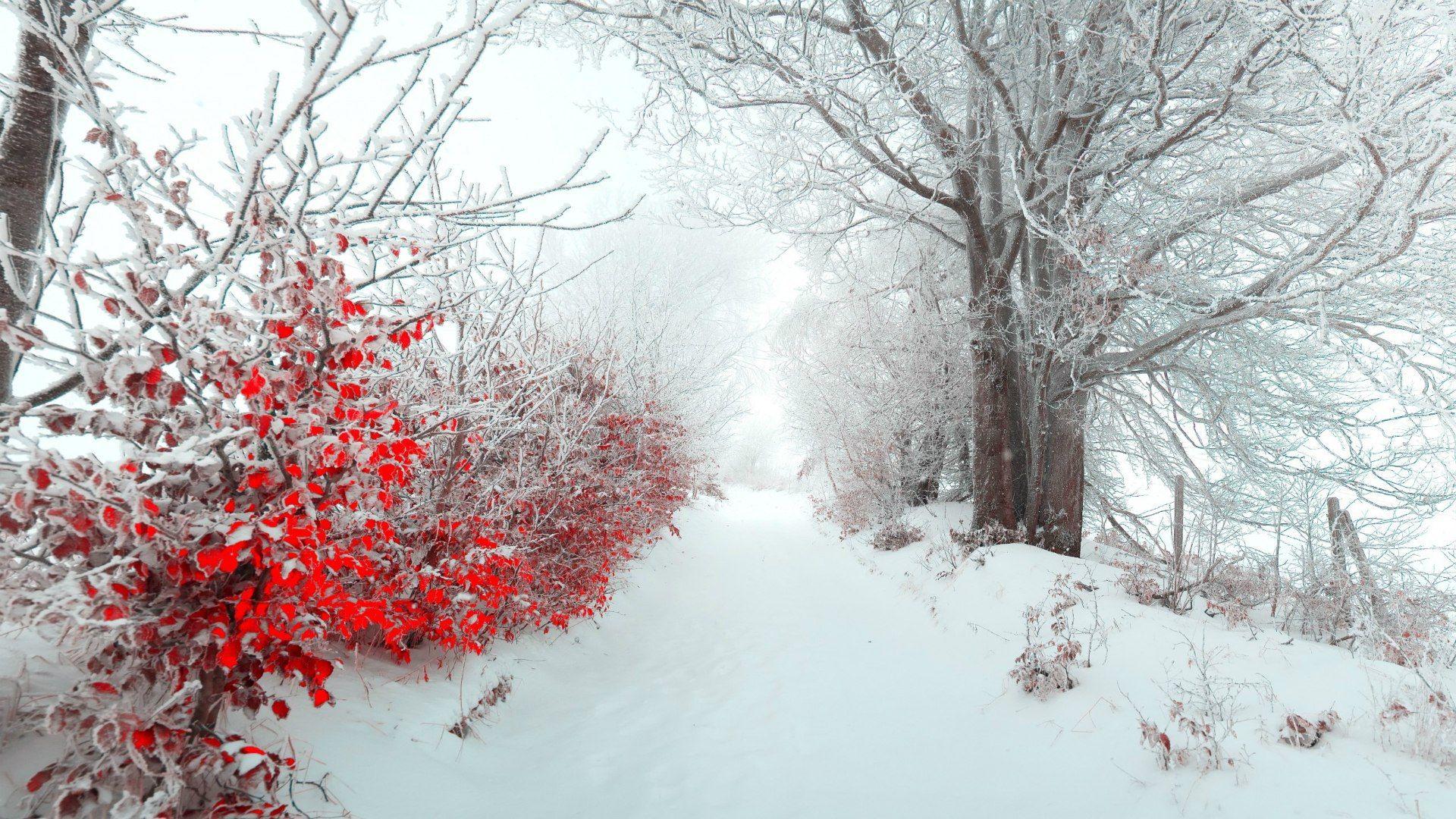 Amazing Wallpaper Love Winter - bd826756e6d66dd93577e49be3bc3d43  Photograph_483533.jpg
