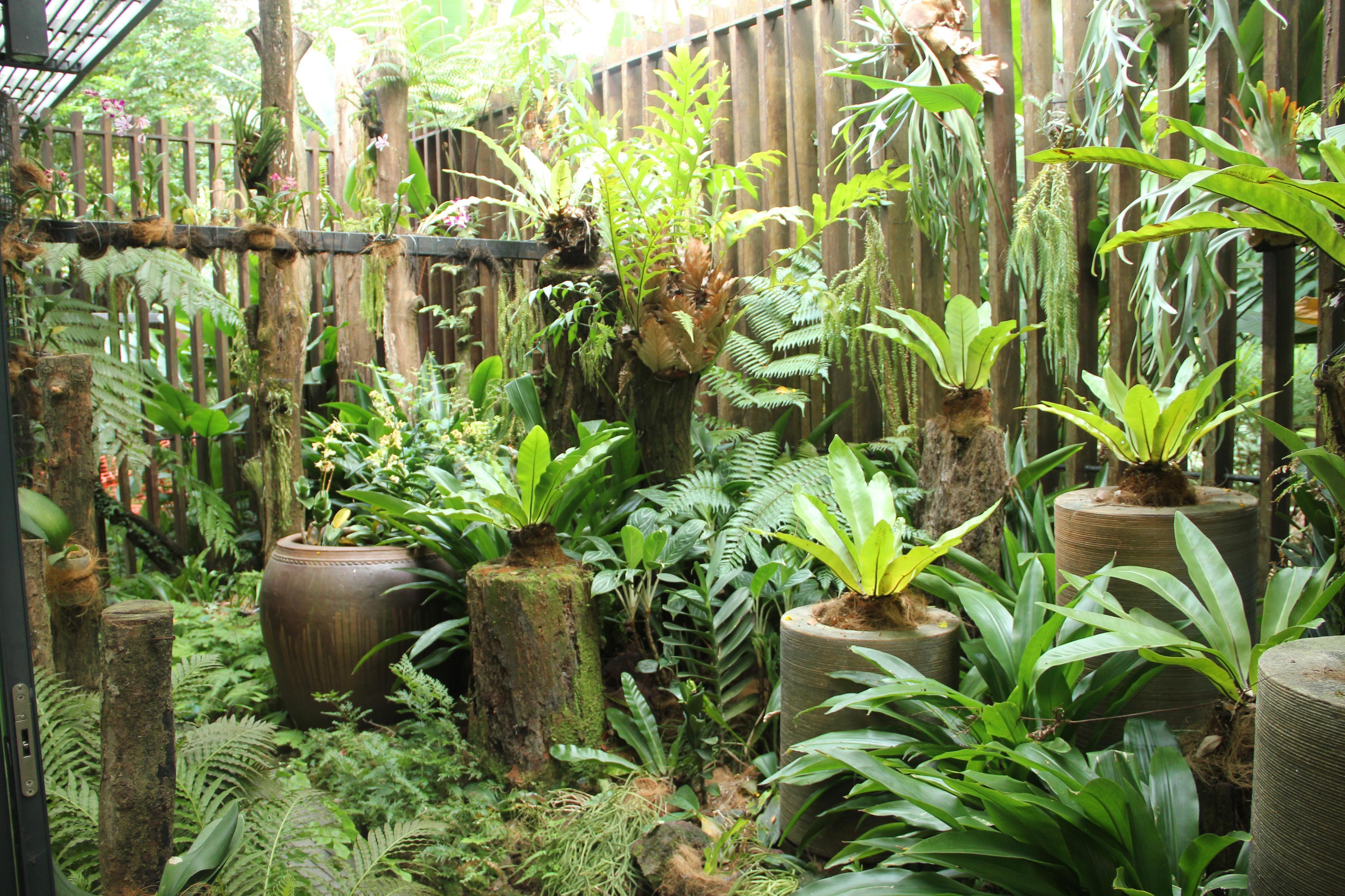 different types of ferns Plant Addiction Pinterest Fern