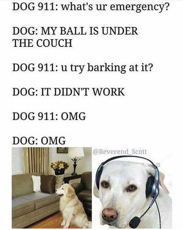 Pin By Bill Eeeee On Same Funny Dog Memes Funny Animal Memes Dog 911