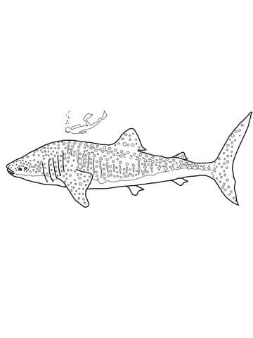 walvishaai kleurplaat walvishaaien kleurplaten en