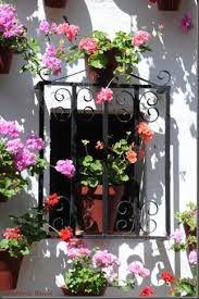 Resultado de imagen para flores que alegran la vida