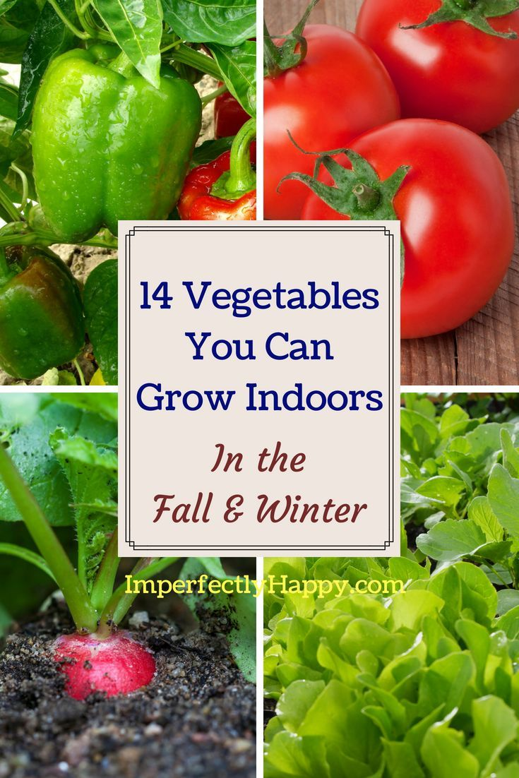 14 Vegetables You Can Grow Indoors In The Fall Winter 400 x 300