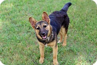 Adopt Xena On Dogs Dog Search German Shepherd Dogs