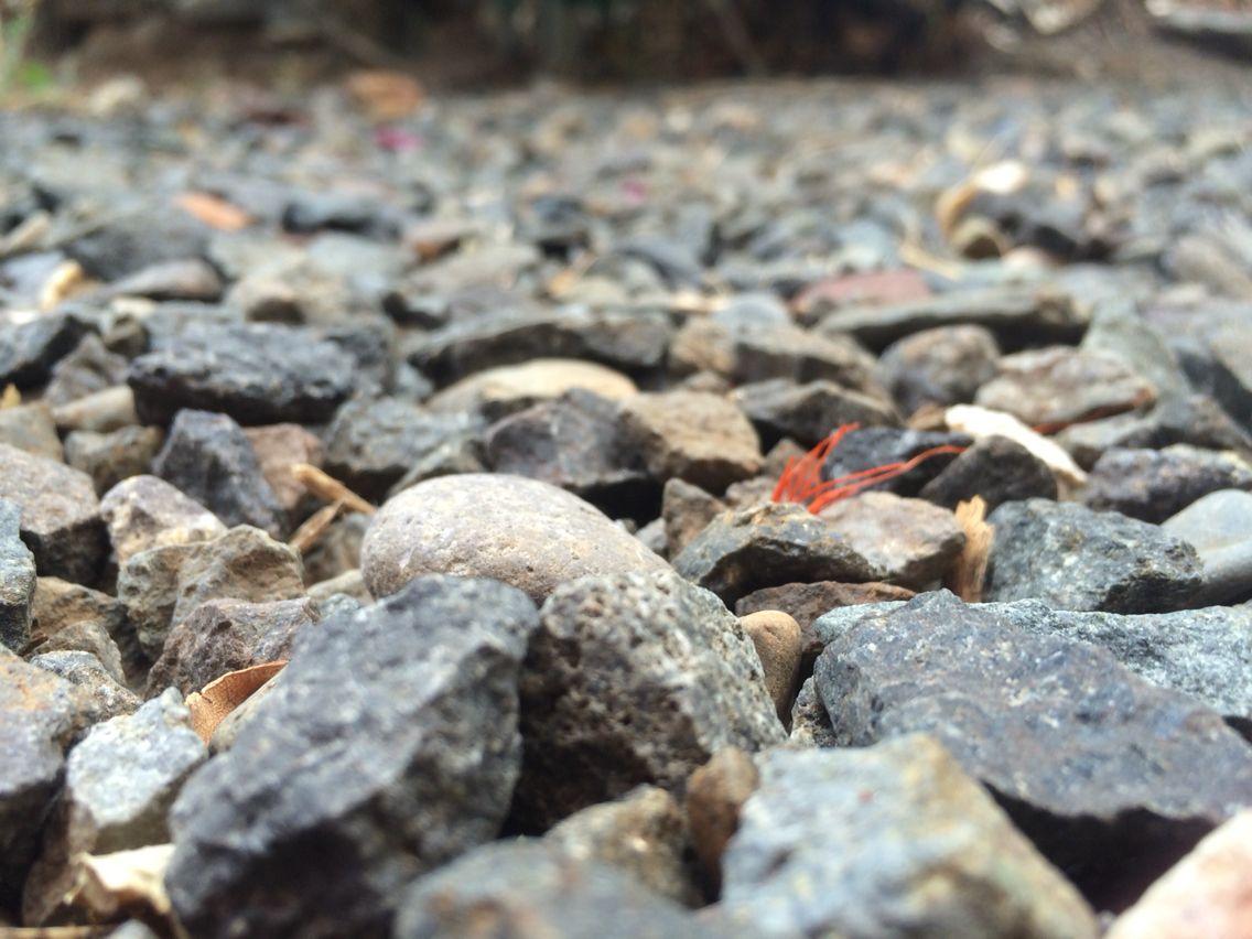 Toma la fotografía a ras de suelo, enfoca un punto cercano para crear el efecto de lejanía en la parte trasera