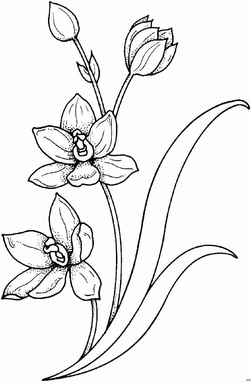 10 Grossartig Malvorlage Blumenranke Gedanke 2020 Tattoo Motive Blumenranken Malvorlagen Blumen