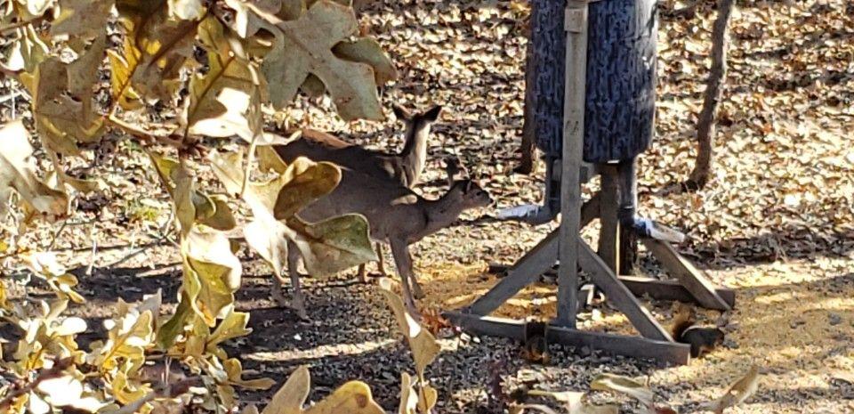 DIY 55 Gallon Gravity Deer Feeder Gravity deer feeders