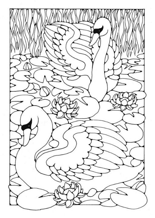 Swans Coloring Page Bird Coloring Pages Coloring Pages Coloring Books