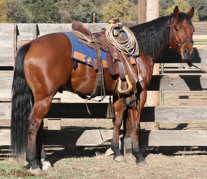 White Horse Blue Socks Barrel Racing RR5W0954w | Barrel