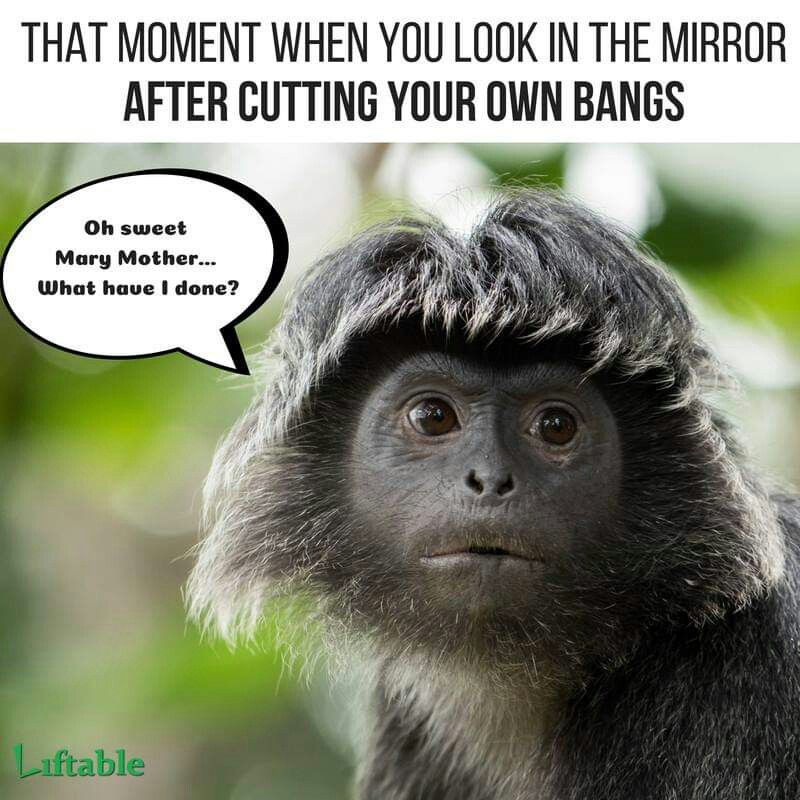 Pin By Megan Weight On Funny Stuff Monkeys Funny Hairstylist Humor Laugh At Yourself Quotes
