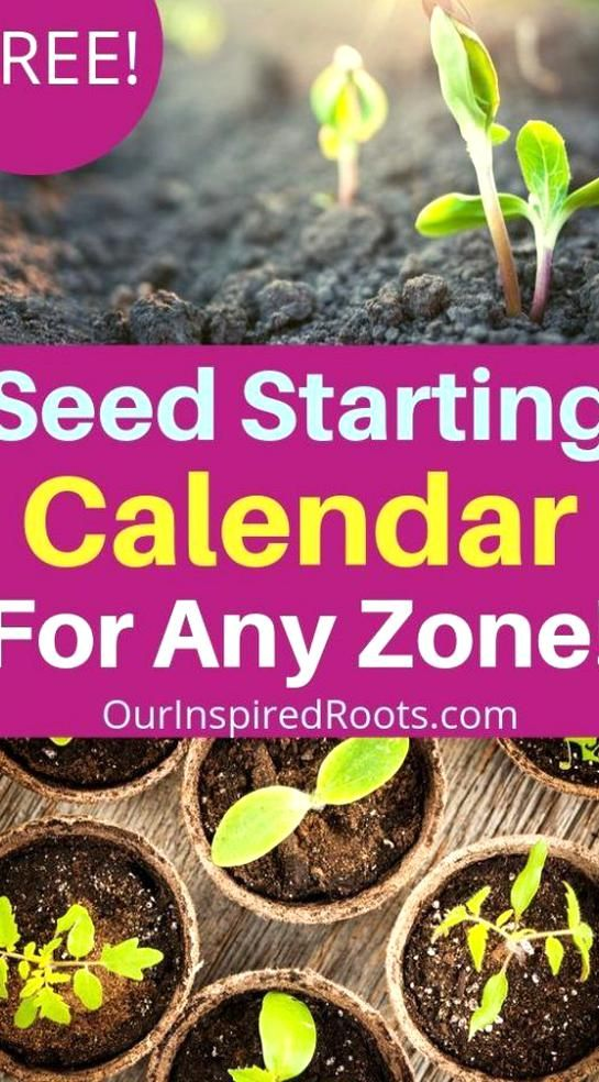 Looking For A Seed Starting Calendar So You Will Know When Toy Start Seeds This One In 2020 Planting Seeds Indoors Seed Starting Calendar Planting Flowers From Seeds