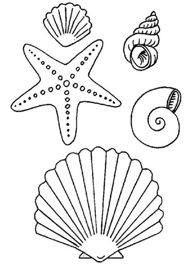 Starfish And Sea Shell Coloring Page Coloring Pages Embroidery Patterns Coloring Books