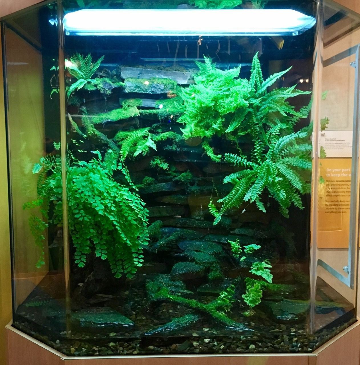 Sunfish exotics animal exhibits pinterest exotic vivarium and