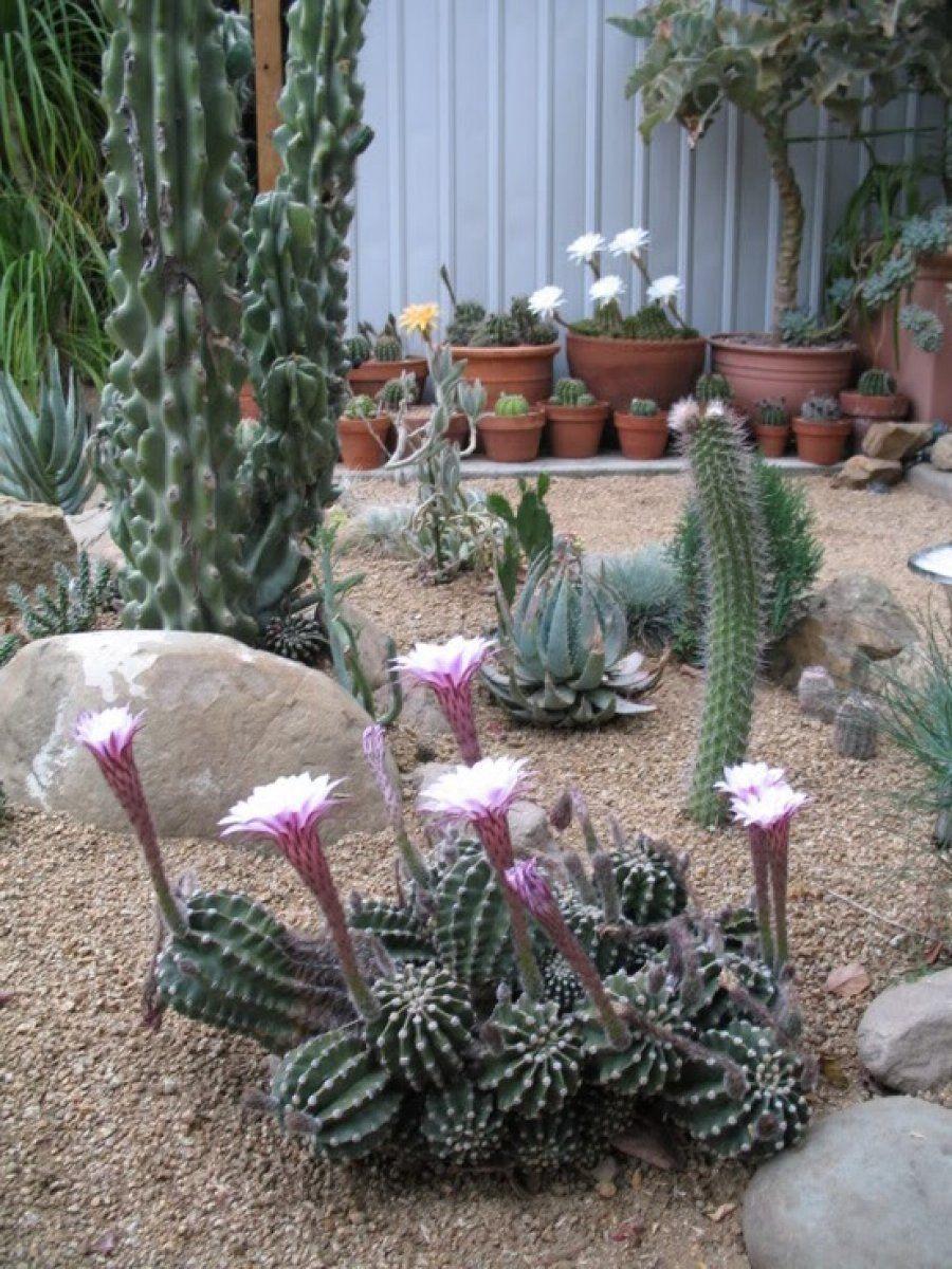 Descubriendo Las Suculentas E Imágenes Para Reconocerlas Suculentas Plantas De Desierto Jardín De Cactus