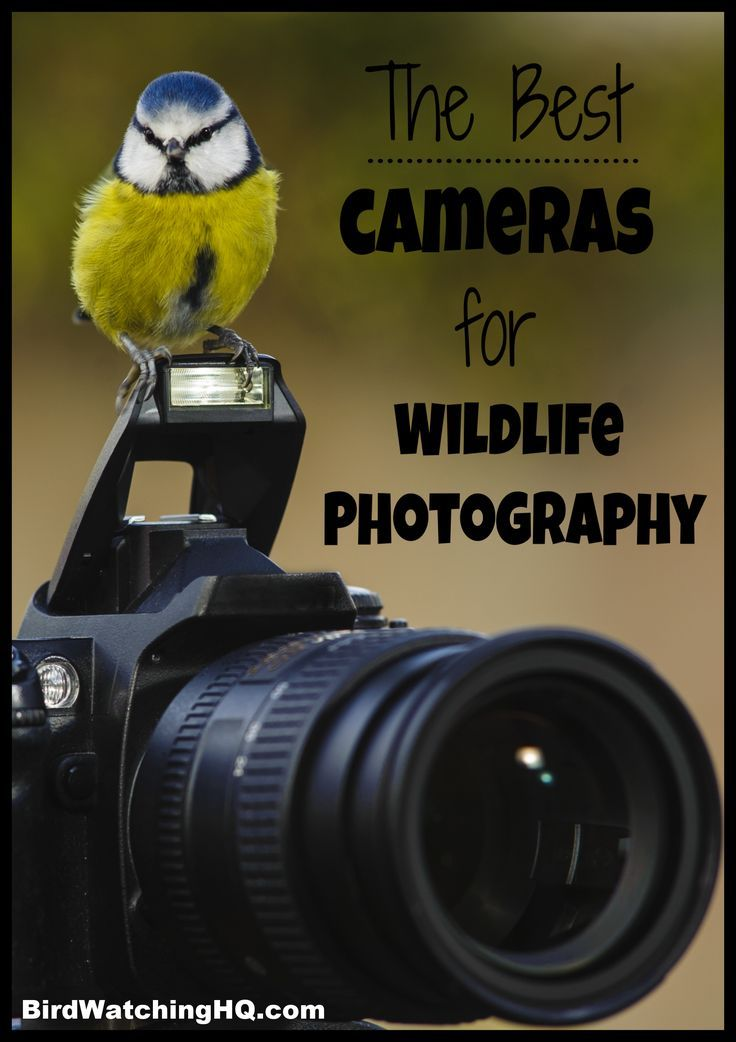 The 7 Best Cameras for Wildlife Photography (2019)