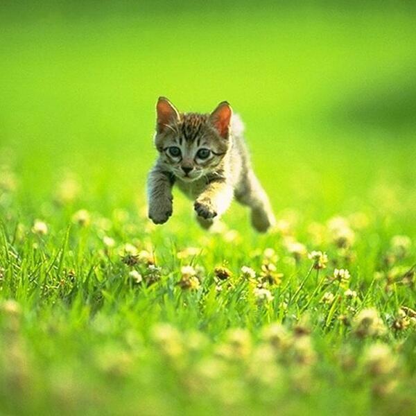 Image result for kittens running