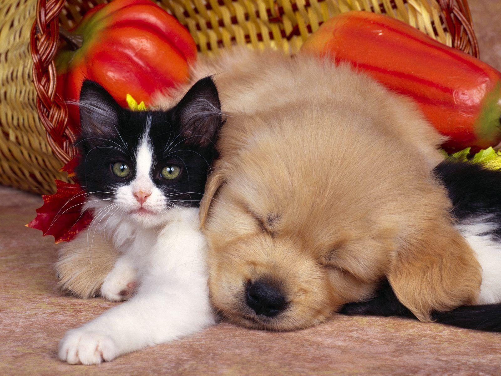 Cute Cat And Dog Hdpicorner