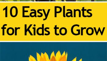 Top 10 Easy Plants for Kids to Grow