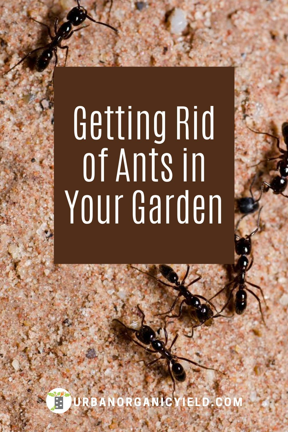 How To Get Rid Of Ants In My Flowers