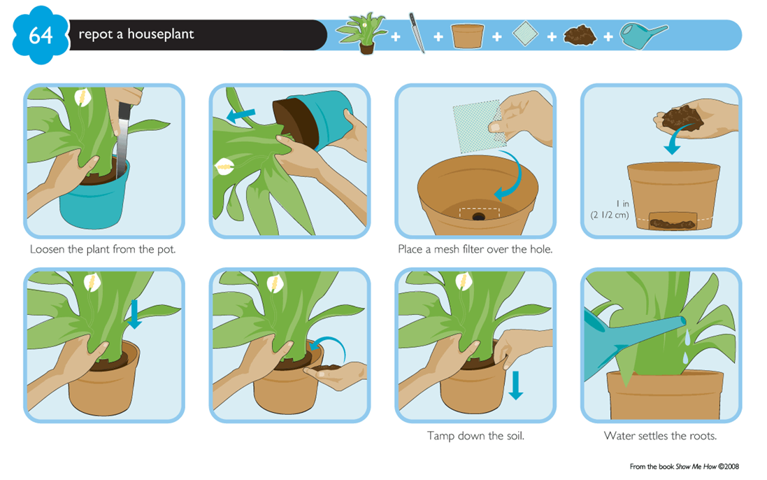 graphical instructions on how to pot a plant kib101 Pinterest