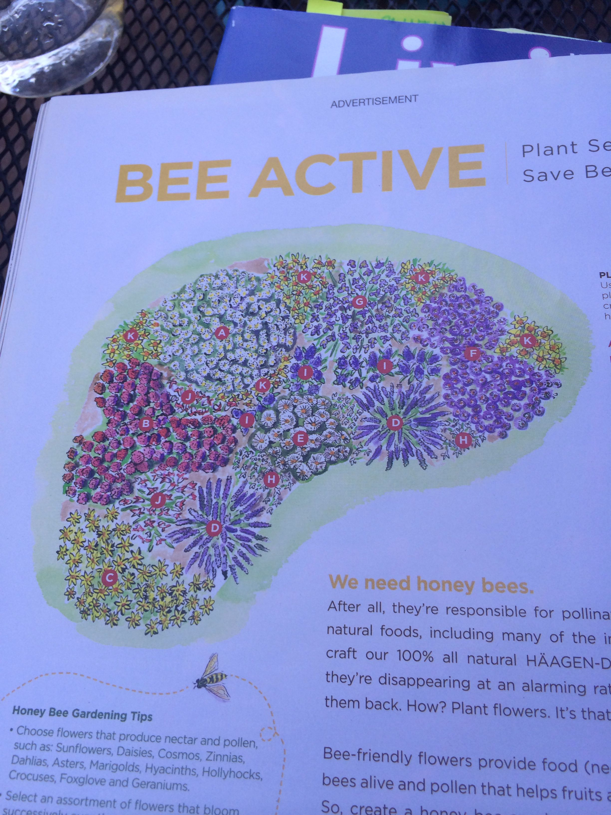 Plan Bee From Haagen Dazs Plant These For Your Own Honey Bee Garden A White Boltonia B Jupiter S Beard C Zagreb Ti Honey Bee Garden Bee Garden Plan Bee
