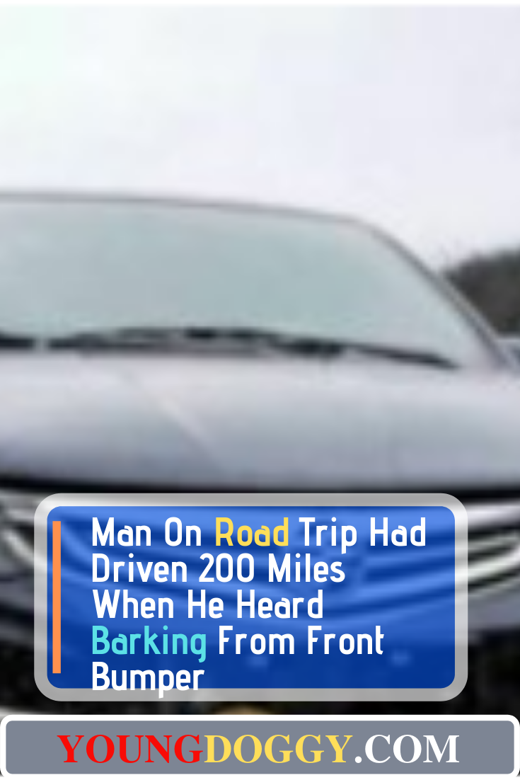 Man On Road Trip Had Driven 200 Miles When He Heard Barking From Front Bumper #animalrescue